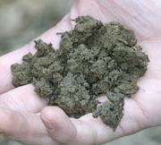 Good organic soil
