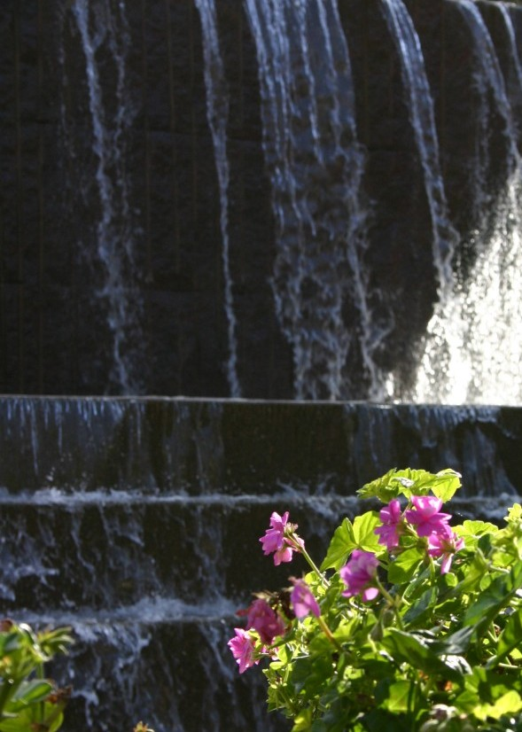 Water feature and flower