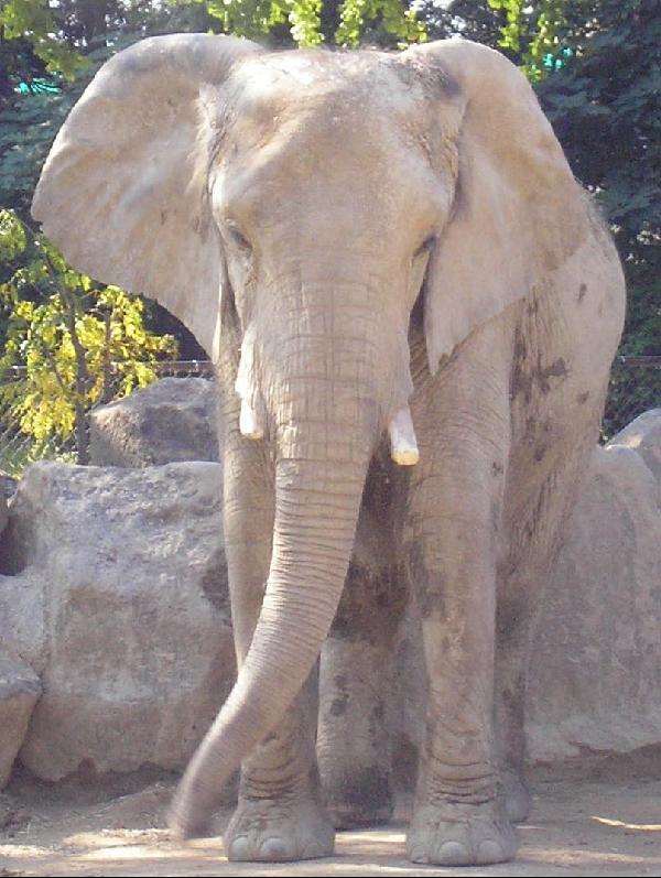 Petal October 2006