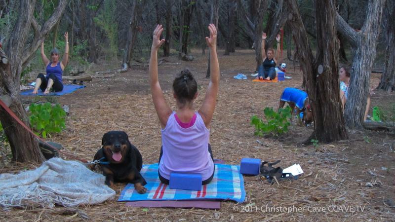 Yoga dog 2