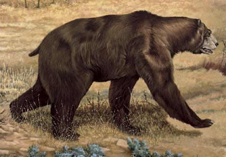 Short faced bear color