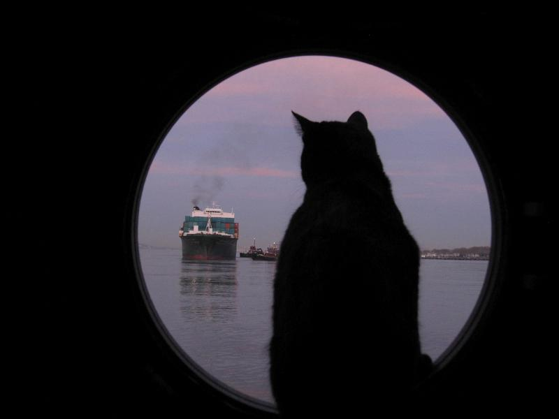 Chiclet in porthole + NSCSA ship