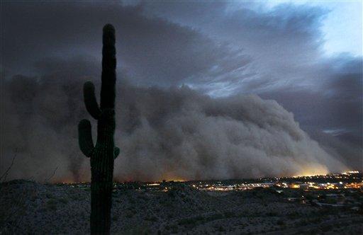 Dusty Cactus