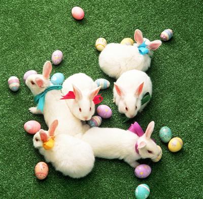 easter-bunnies.jpg