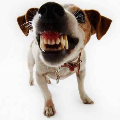 Pet Dental Month Smile