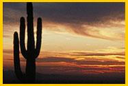 Saguaro Dramatic Sky photo