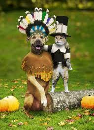 Thanksgiving dog & cat