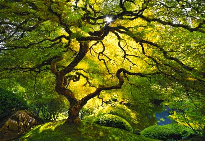 tree-peace