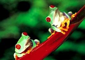 frogs-focus