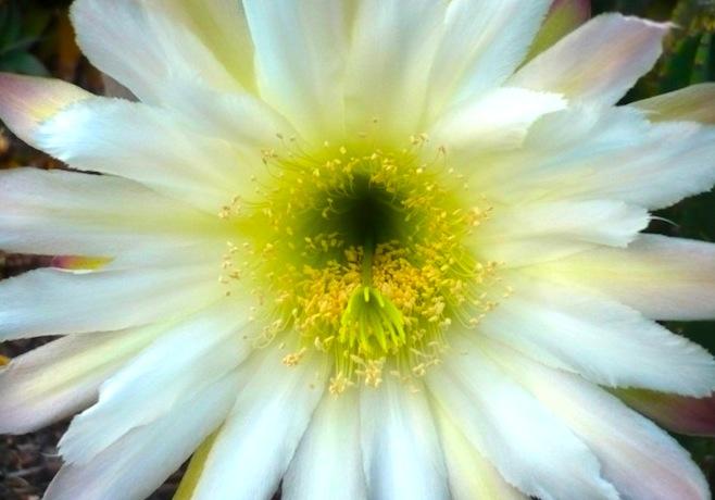 flower-silence