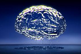 brain whole