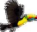 toucan-call