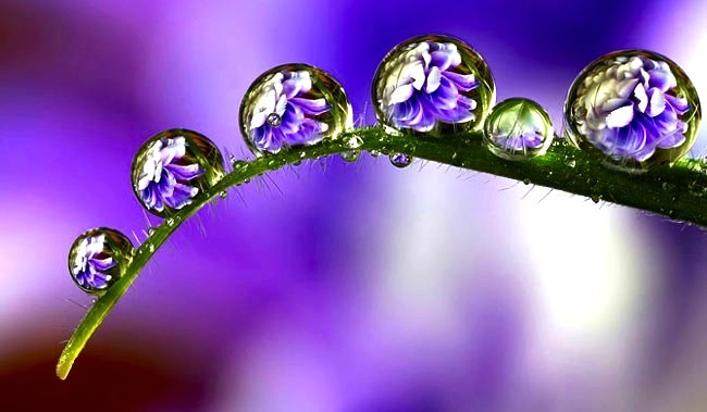 dew-purple-c