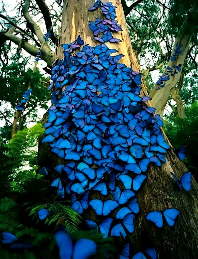 butterflies-blue