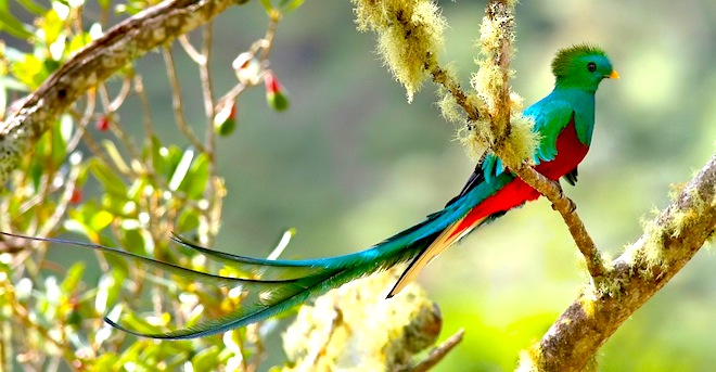 quetzalcoatl-bird