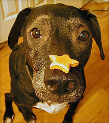 Dog with biscuit
