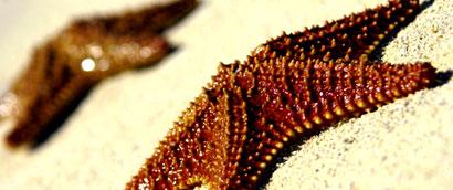 starfish-wet.jpg