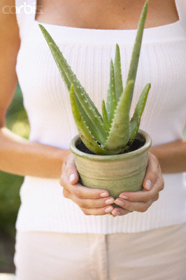 woman holding aloe vera plant
