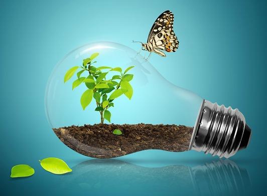 Lightbulb & Butterfly