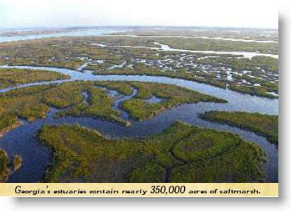 Georgia Estuaries are Vital!