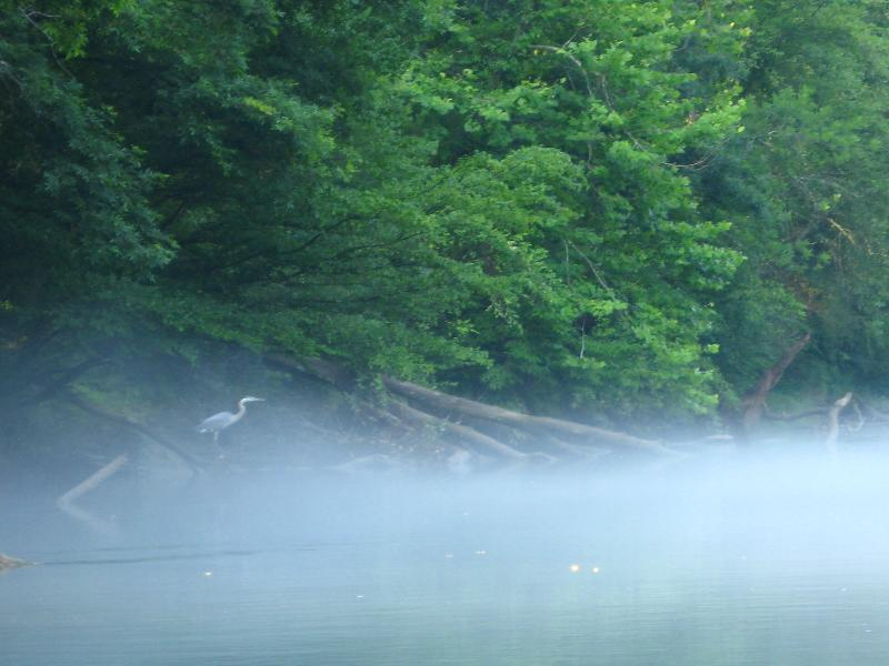 Chattahoochee River w Blue Heron
