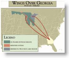 GA Ducks Origin