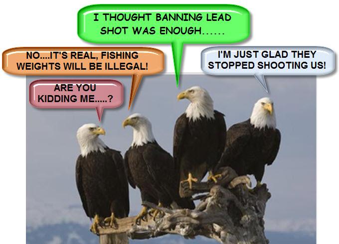 Bald Eagles Talking