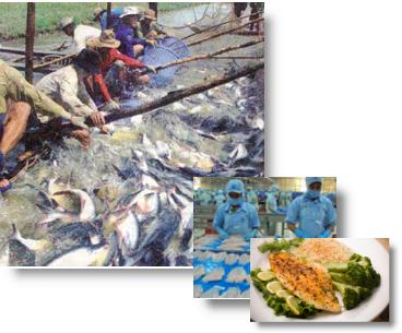 Vietnam Catfish