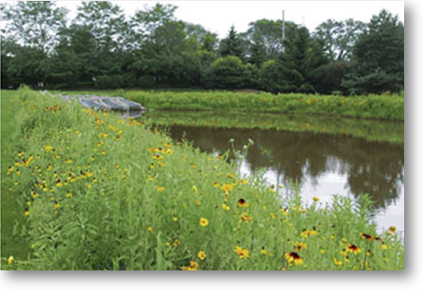 Buffer - Detention Pond
