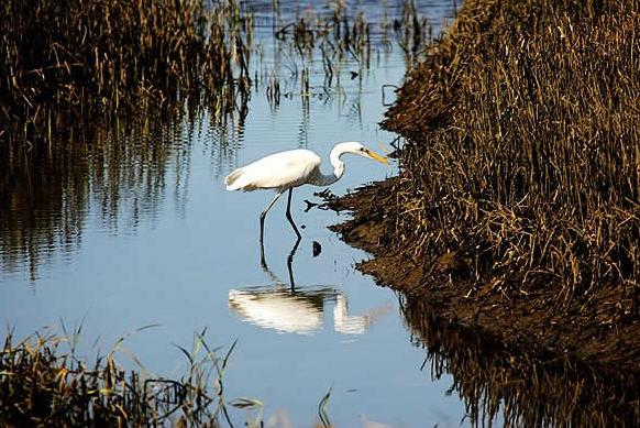 Wetlands Preservation