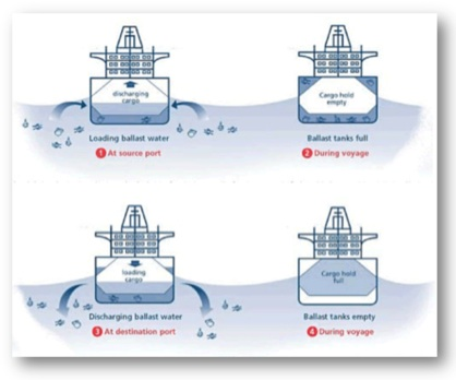 Ballast Water Flowchart