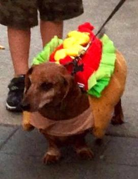 Hot dog, Best Pet & Owner Costume