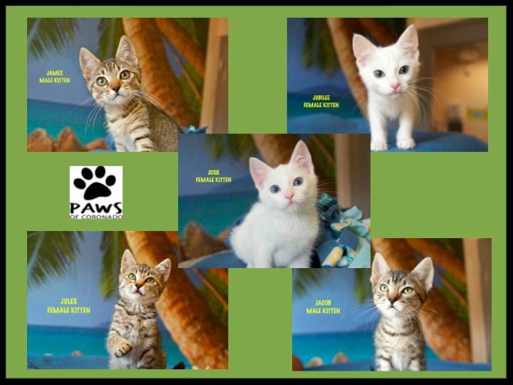 Kittens - Pet of the Week