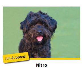 Nitro - I'm Adopted
