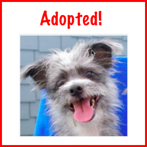 Adopted!