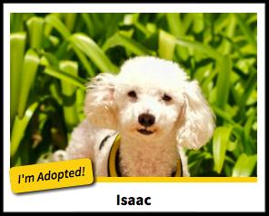 Successful Adoptions