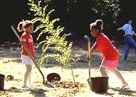 Chicago Tree Planting