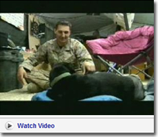 Marine IED Detector Dog Wounded