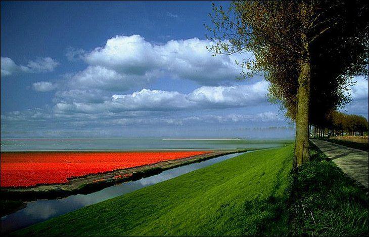 Holland 9