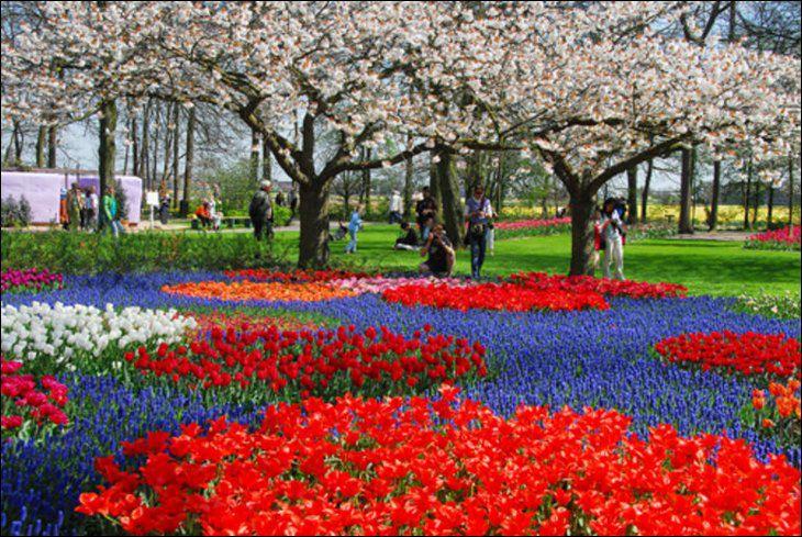 Holland 13