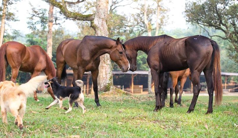 Horses head to head
