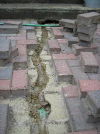 chipmunk trail under pavers