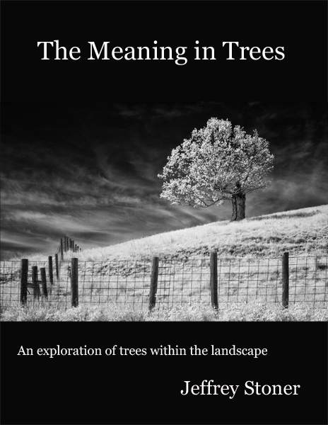 The Meaning in Trees - Portfolio