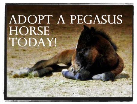 Adopt a Horse - Star