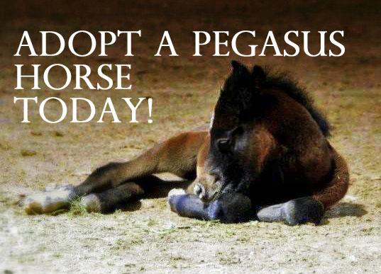 Adopt a Pegasus Horse
