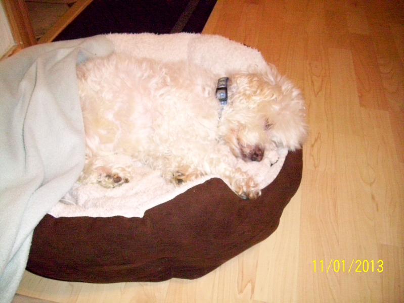 RIP my precious Smudge : 28/10/98 - 17/1/13