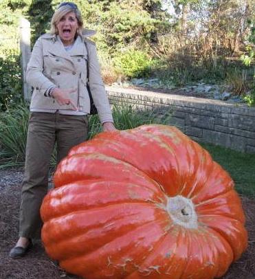 Heidi's Giant Pumpkin