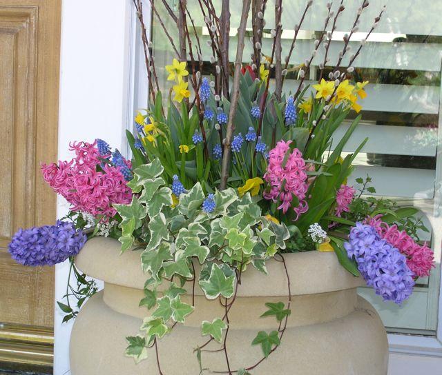 Spring_Pansy_Pot