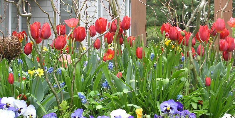 HLG_Spring_Flowers