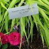 Garden Labeling